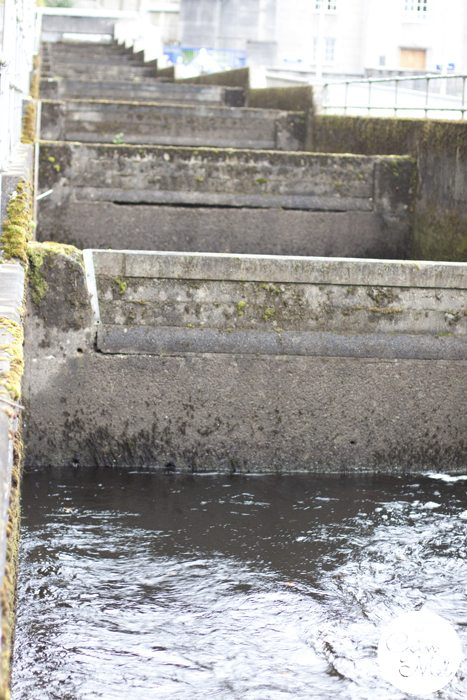 Pitlochry - the ideal place to stop on your way to the Scottish Highlands - River Tummel in Autumn Fall - a Lovely Walk with the Family - the Fish Ladder