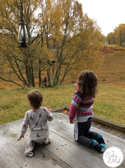 Holidays of a Lifetime at Eagle Brae - Wriggly and Jumpy Spotting Deer