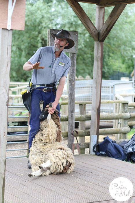 A Rainy Day at Willows Farm & a Few Facts about Sheep Shearing