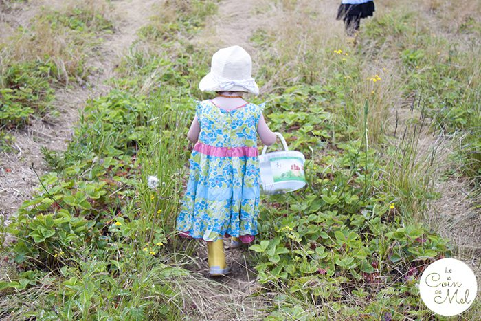 Strawberry Picking & a Picnic with a Difference - Busy Busy