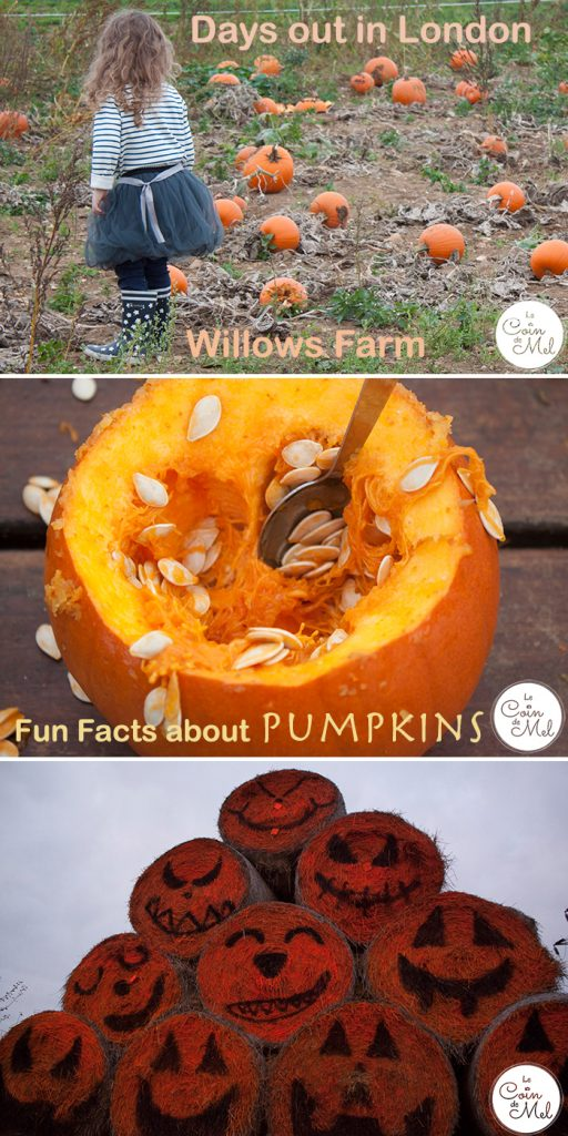 Head over to Willows Farm for a great autumnal day in London - their pumpkin patch is impressive! Oh, and read on if you want to find some fun facts about pumpkins. I had no idea about #3!