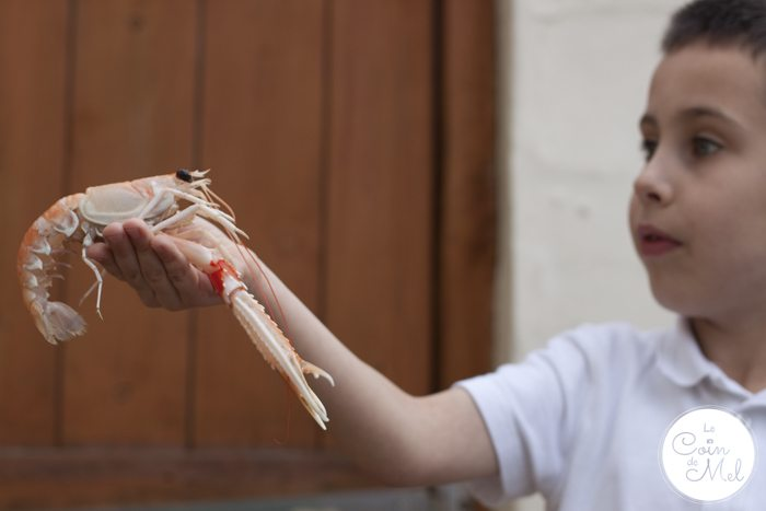 Langoustines - Where to Get Them, How to Cook Them, How to Peel Them - Sorry little friend