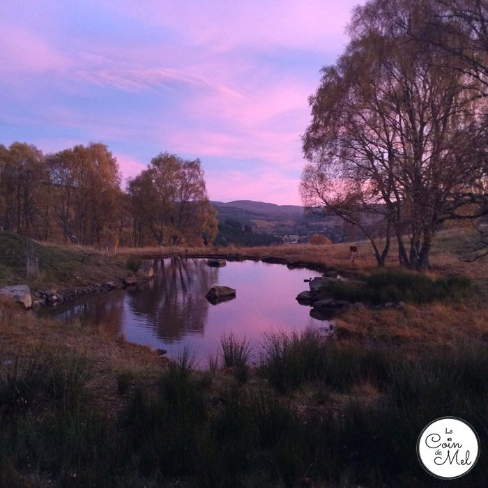 Holidays of a Lifetime at Eagle Brae - Pond Outside Loxia at Dawn