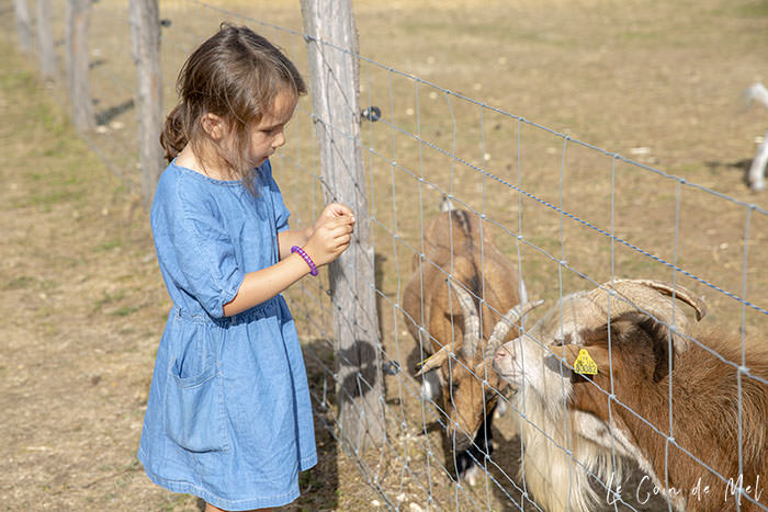 Wriggly feeding the goats at La Ferme Souchinet