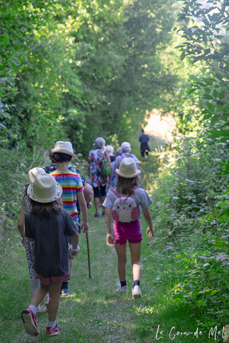 Children seen from the back, walking in the woods